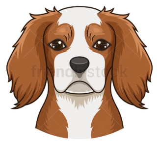 Cavalier king charles spaniel face. PNG - JPG and vector EPS (infinitely scalable).
