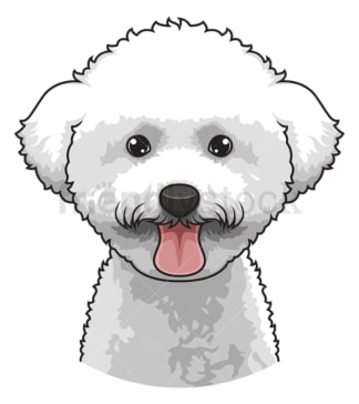 Bichon frise face. PNG - JPG and vector EPS (infinitely scalable).