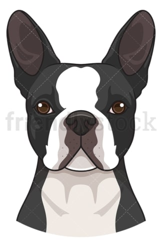 Boston terrier face. PNG - JPG and vector EPS (infinitely scalable).
