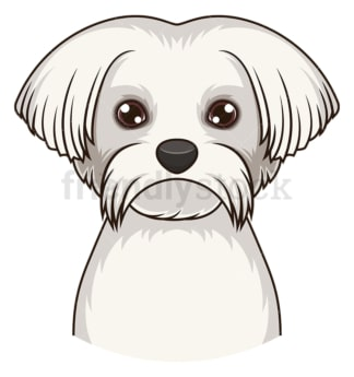 Maltese face. PNG - JPG and vector EPS (infinitely scalable).