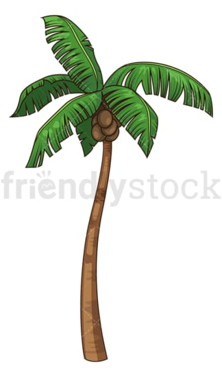 Coconut tree. PNG - JPG and vector EPS file formats (infinitely scalable). Image isolated on transparent background.