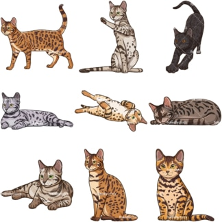 Bengal cats. PNG - JPG and infinitely scalable vector EPS - on white or transparent background.