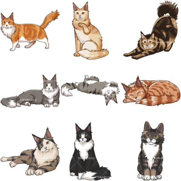 Maine coon cats. PNG - JPG and infinitely scalable vector EPS - on white or transparent background.
