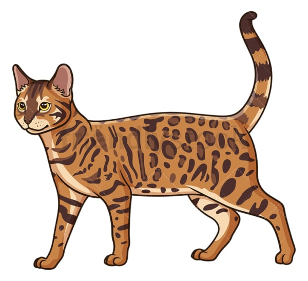 Walking bengal cat. PNG - JPG and vector EPS (infinitely scalable).
