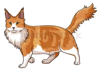 Walking maine coon cat. PNG - JPG and vector EPS (infinitely scalable).