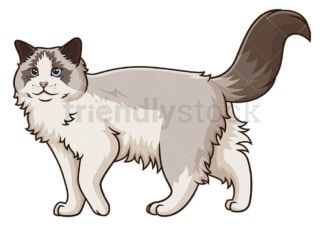 Walking ragdoll cat. PNG - JPG and vector EPS (infinitely scalable).