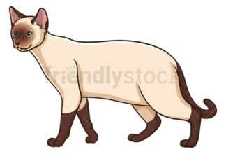 Walking siamese cat. PNG - JPG and vector EPS (infinitely scalable).