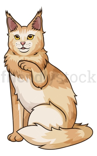 Playful maine coon cat. PNG - JPG and vector EPS (infinitely scalable).
