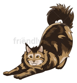 Maine coon cat stretching. PNG - JPG and vector EPS (infinitely scalable).