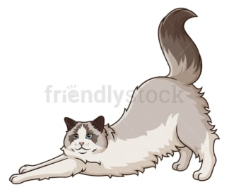 Ragdoll cat stretching. PNG - JPG and vector EPS (infinitely scalable).