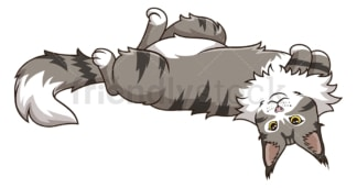 Maine coon cat lying on its back. PNG - JPG and vector EPS (infinitely scalable).