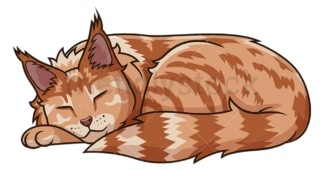 Maine coon cat sleeping. PNG - JPG and vector EPS (infinitely scalable).