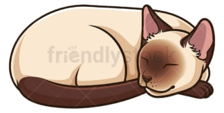 Siamese cat sleeping. PNG - JPG and vector EPS (infinitely scalable).