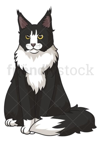Maine coon cat sitting. PNG - JPG and vector EPS (infinitely scalable).