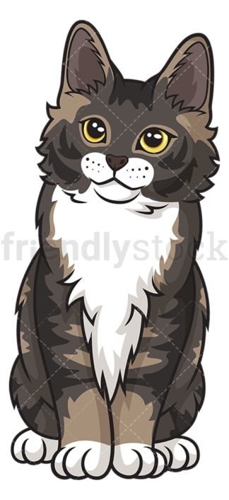 Maine coon kitten. PNG - JPG and vector EPS (infinitely scalable).