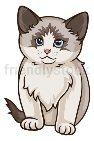Ragdoll kitten. PNG - JPG and vector EPS (infinitely scalable).