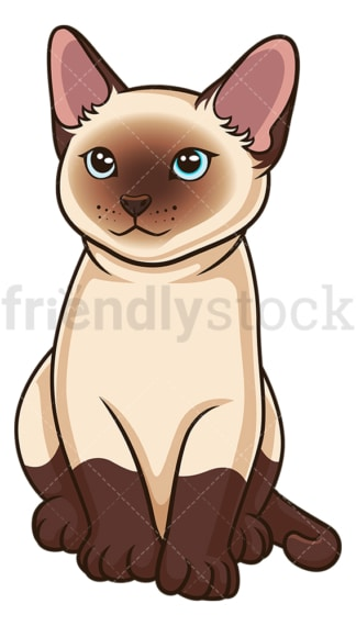 Siamese kitten. PNG - JPG and vector EPS (infinitely scalable).