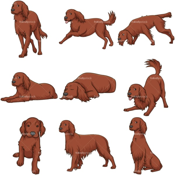 Irish setter dogs. PNG - JPG and vector EPS file formats (infinitely scalable).