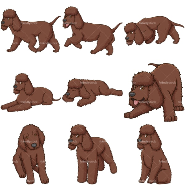 Irish water spaniel dogs. PNG - JPG and vector EPS file formats (infinitely scalable).