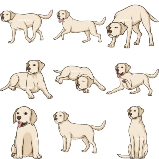 Labrador retriever dogs. PNG - JPG and vector EPS file formats (infinitely scalable).