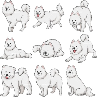 Samoyed dogs. PNG - JPG and vector EPS file formats (infinitely scalable).