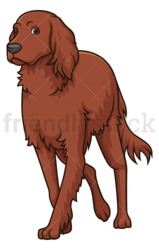 Irish setter walking. PNG - JPG and vector EPS (infinitely scalable).