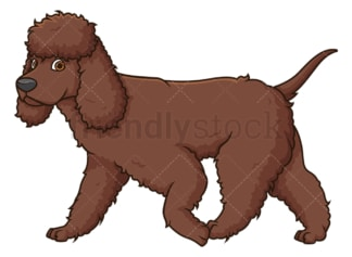 Irish water spaniel walking. PNG - JPG and vector EPS (infinitely scalable).