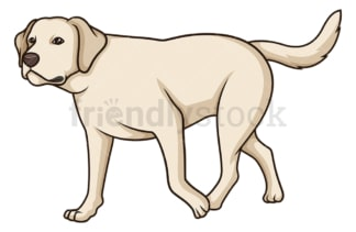 Labrador retriever walking. PNG - JPG and vector EPS (infinitely scalable).