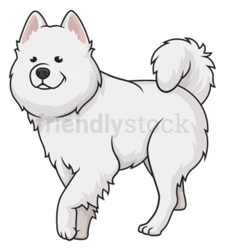 Samoyed walking. PNG - JPG and vector EPS (infinitely scalable).