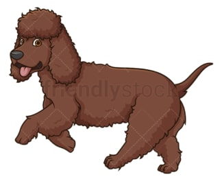 Irish water spaniel running. PNG - JPG and vector EPS (infinitely scalable).