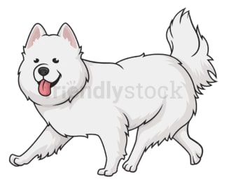 Samoyed dog running. PNG - JPG and vector EPS (infinitely scalable).