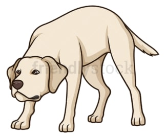 Labrador retriever sniffing. PNG - JPG and vector EPS (infinitely scalable).