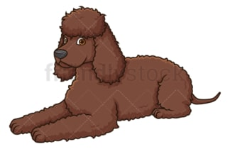 Irish water spaniel lying down. PNG - JPG and vector EPS (infinitely scalable).