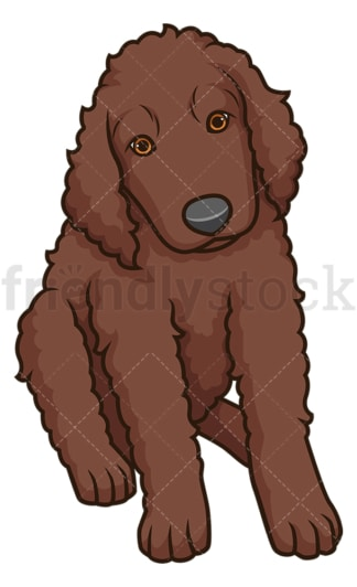 Cute irish water spaniel puppy. PNG - JPG and vector EPS (infinitely scalable).