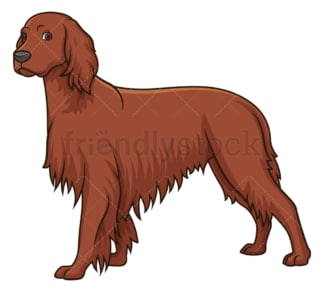 Gorgeous irish setter. PNG - JPG and vector EPS (infinitely scalable).