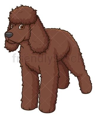 Gorgeous irish water spaniel. PNG - JPG and vector EPS (infinitely scalable).
