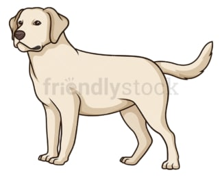 Gorgeous labrador retriever. PNG - JPG and vector EPS (infinitely scalable).