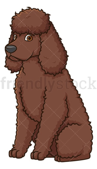 Obedient irish water spaniel sitting. PNG - JPG and vector EPS (infinitely scalable).