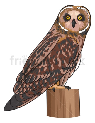 Short-Eared owl. PNG - JPG and vector EPS file formats (infinitely scalable). Image isolated on transparent background.