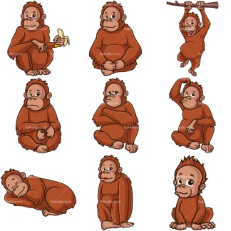 Wild orangutans. PNG - JPG and infinitely scalable vector EPS - on white or transparent background.