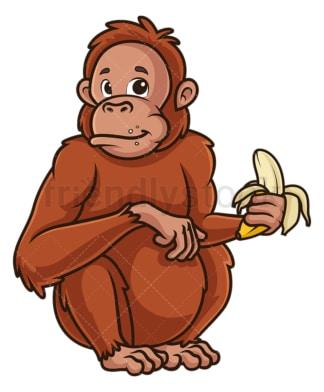 Orangutan eating banana. PNG - JPG and vector EPS (infinitely scalable).