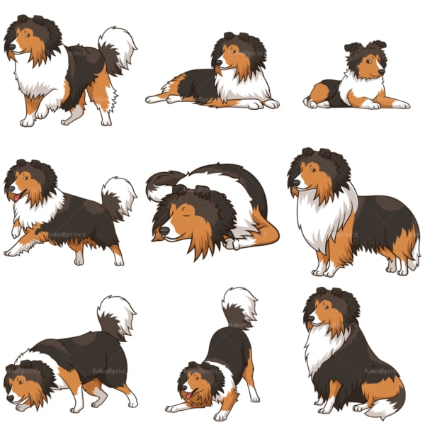Shetland sheepdog dogs. PNG - JPG and vector EPS file formats (infinitely scalable).