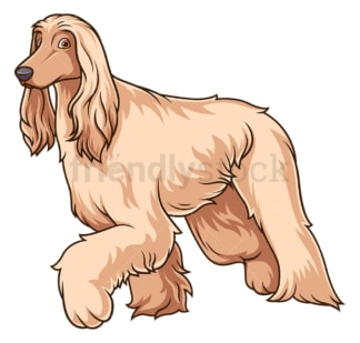 Afghan hound walking. PNG - JPG and vector EPS (infinitely scalable).