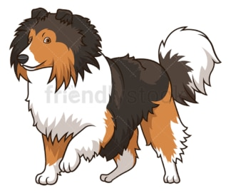 Sheltie walking. PNG - JPG and vector EPS (infinitely scalable).