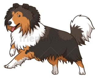 Shetland sheepdog dog running. PNG - JPG and vector EPS (infinitely scalable).