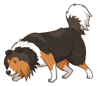 Shetland sheepdog dog sniffing. PNG - JPG and vector EPS (infinitely scalable).