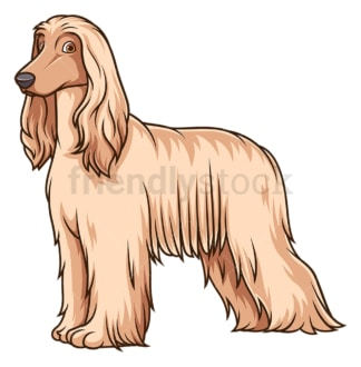 Gorgeous afghan hound. PNG - JPG and vector EPS (infinitely scalable).