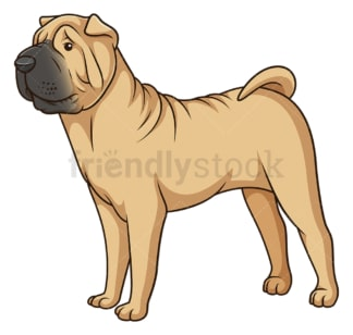 Gorgeous shar pei dog. PNG - JPG and vector EPS (infinitely scalable).