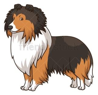 Gorgeous shetland sheepdog dog. PNG - JPG and vector EPS (infinitely scalable).