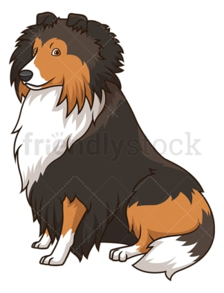 Obedient shetland sheepdog sitting. PNG - JPG and vector EPS (infinitely scalable).